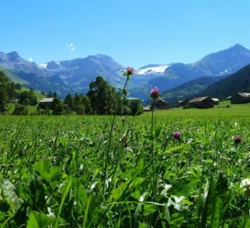 barnes-gstaad-valley-real-estate-agency
