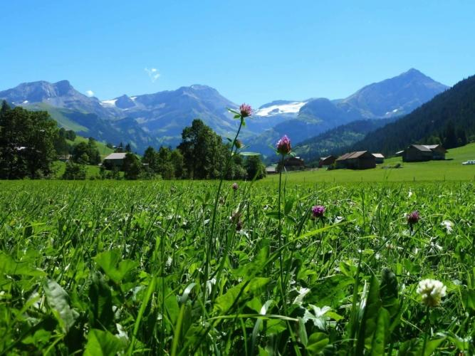 BARNES Gstaad Valley