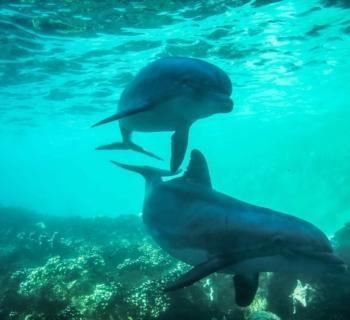 nager-dauphins-baie-tamarin
