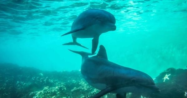 swim-dolphins-bay-tamarin-sea