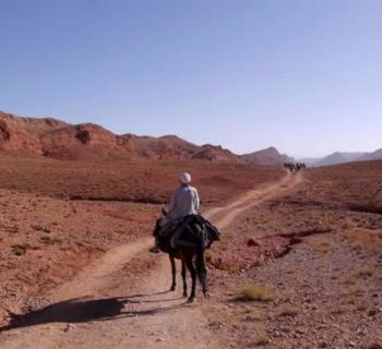 trek-marocain-dos-mulet-visite-desert-oasis