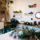 agave-boutique-plant-boutique-decorations-made-plants-belgium