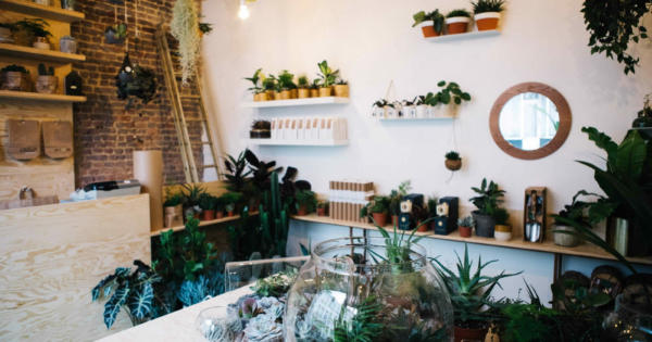 agave-boutique-plantes-decorations-composees-belgique