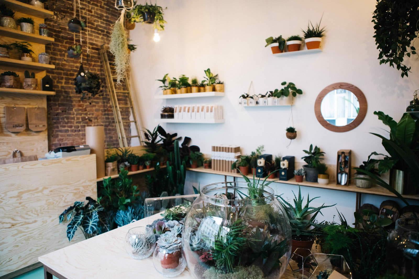agave-boutique-plantes-decorations-composees-belgique