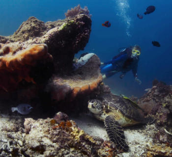 scuba-diving-sites-island-fish