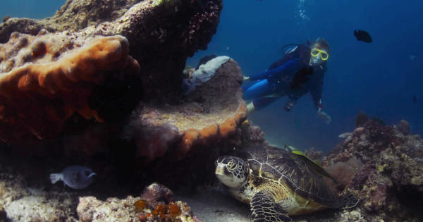 scuba-diving-sites-island-fish