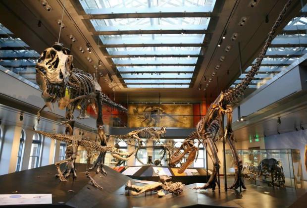 musees-visiter-art-contemporain-latino-histoire-naturelle-mineraux