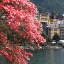 decouvrir-visiter-montreux-alpes-suisses-lac-leman