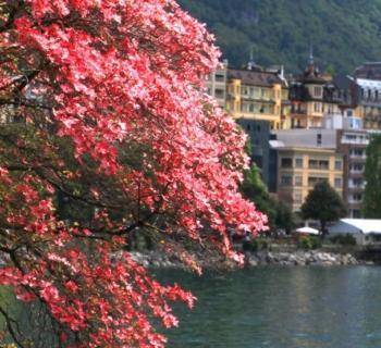 discover-invest-visit-live-montreux-alpes-switzerland-lac-leman