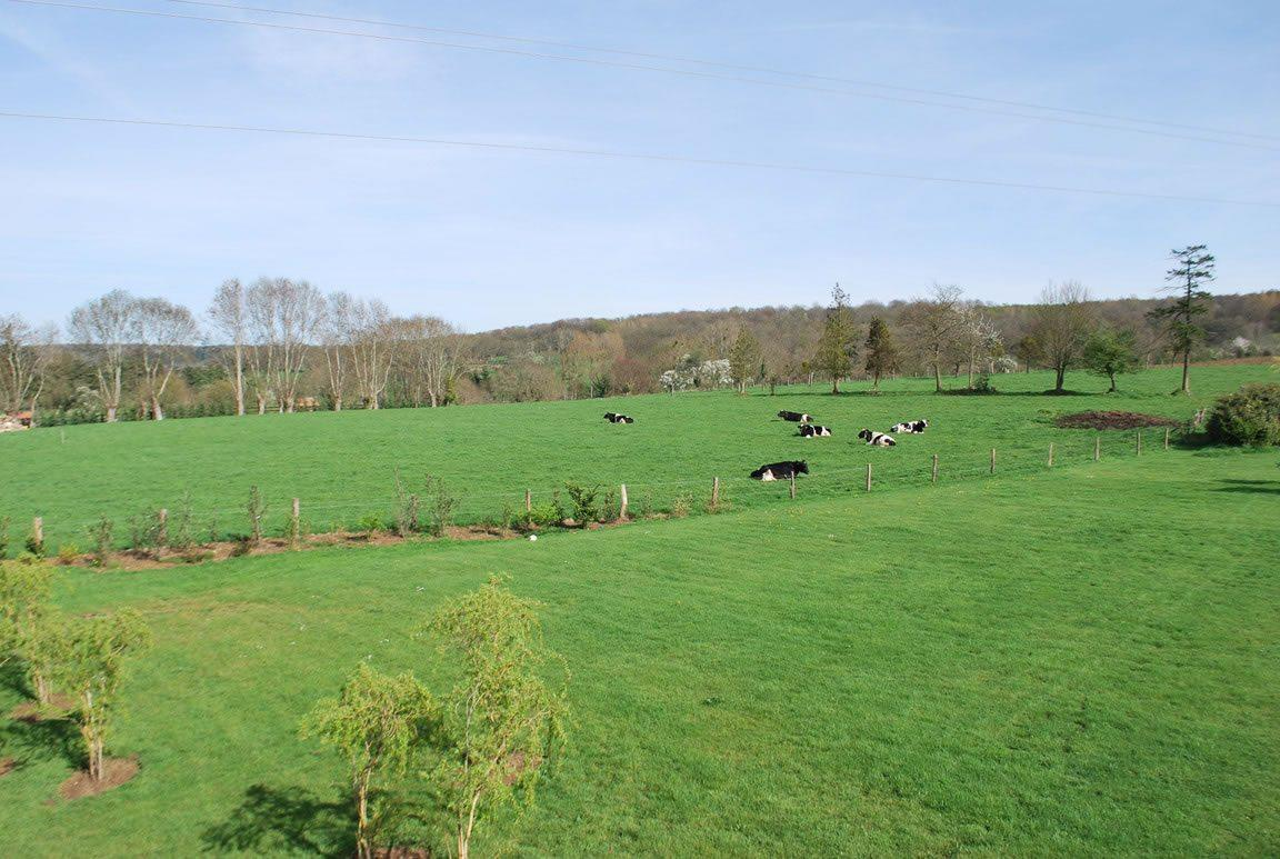 belle-demeure-normande-construction-recente-a-vendre-colombages-terrain-cheminee