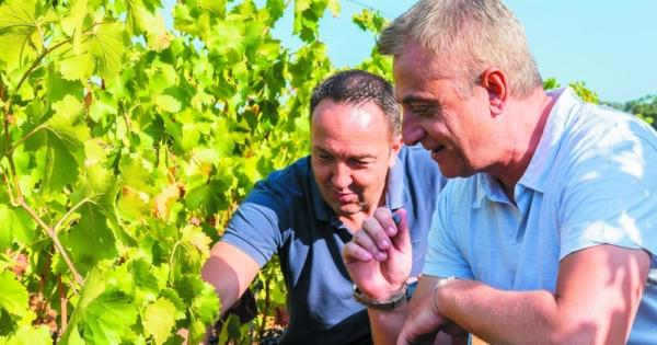 domains-ott-new-winery-viniculture-production-modern-ultra-performance-tool