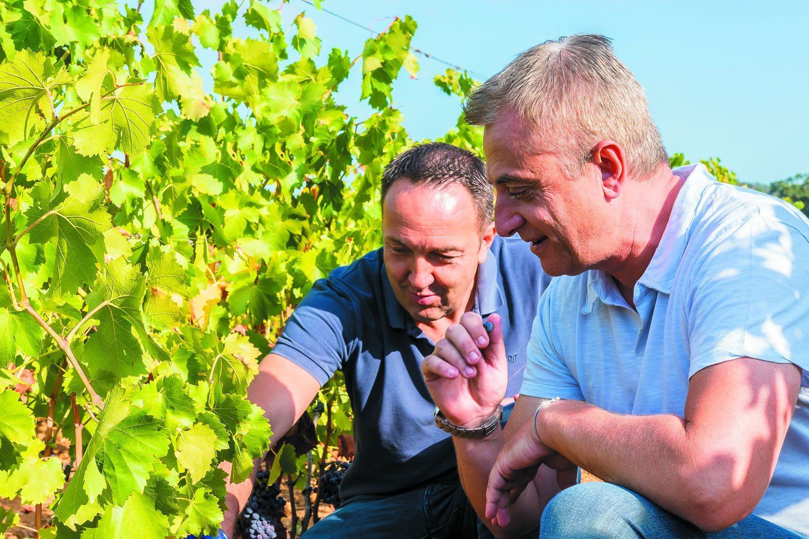 domaines-ott-chai-vinification-production-viticole-outil-moderne-ultraperformant